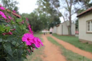 Flower by Road by Accommodation